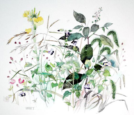 山野草20090717
